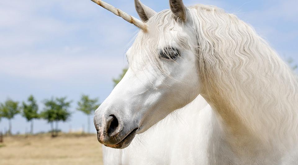 Unicorn-Markt wird klar von China und USA dominiert